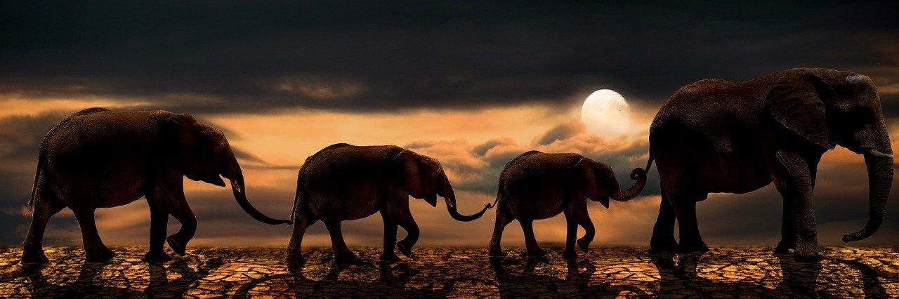 Luna llena en Virgo Elefantes